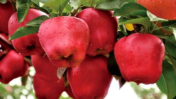 水溶肥怎么用效果好?听苹果种植者张老板怎么说