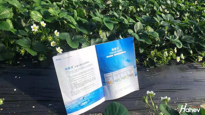 什么土壤适合种草莓?草莓用什么肥料甜?