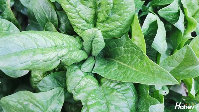 蔬菜不出苗怎么办?蔬菜用什么肥料好?