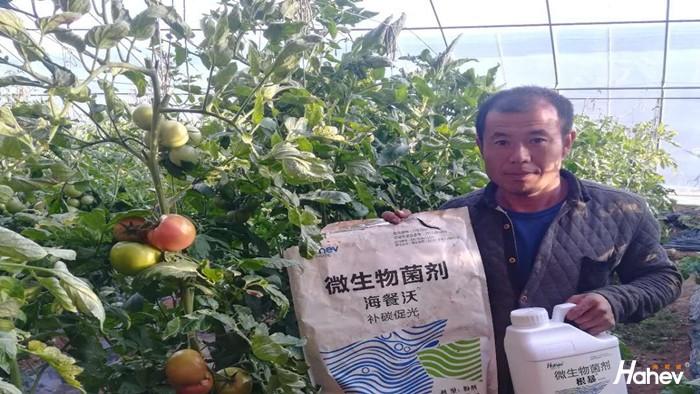 蔬菜施什么肥料好?选择海餐沃水溶肥
