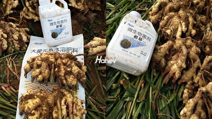 生根剂选哪个?选海餐沃生根剂是个不错的选择