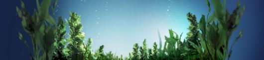 冲施肥可不是随水冲,教你在越冬选用正确的冲施肥