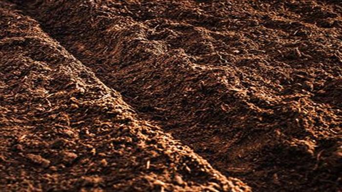 土壤 海餐沃 菌剂+生根剂