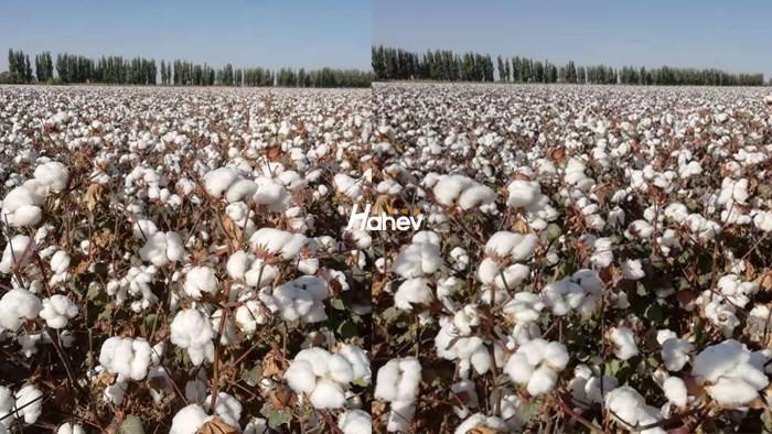 棉花出苗水带什么肥?