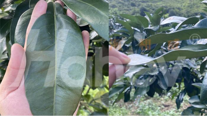 果树秋季施肥的作用,你知道几个?