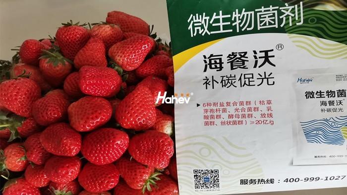 草莓用什么肥好?