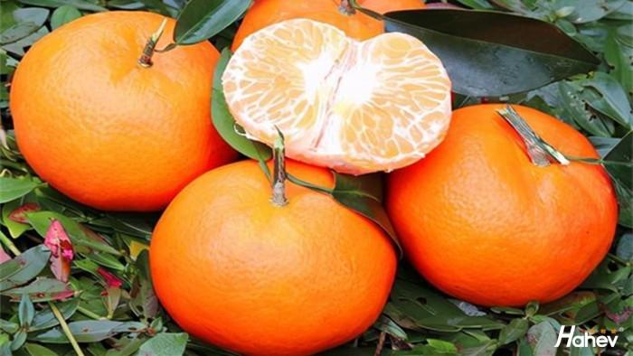 柑橘冻害后该怎么办?