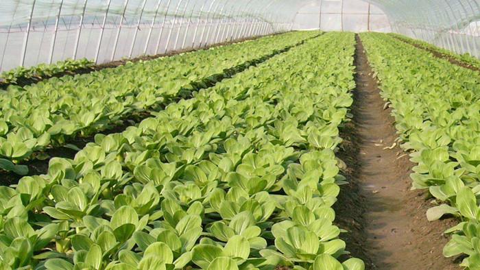 蔬菜施什么肥长得壮