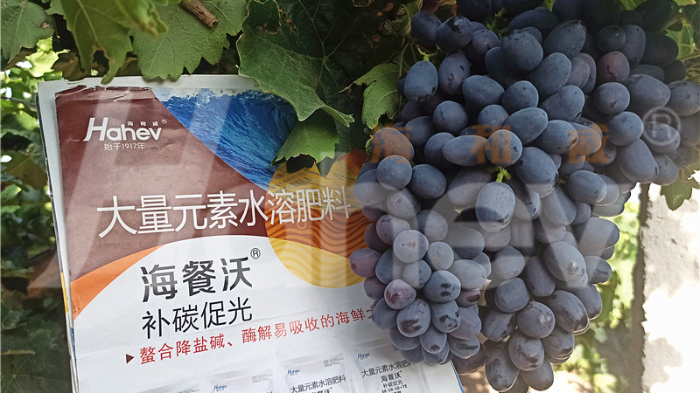 葡萄施什么肥