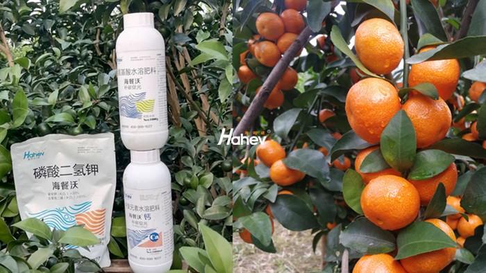 果树叶面肥有哪些种类?使用时有什么注意事项?